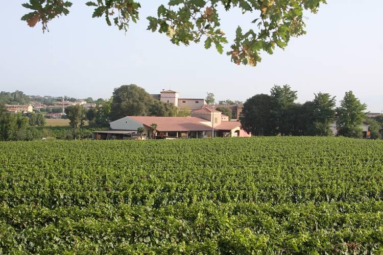 casa-e-vigneto-Colombara-visti-dal-bosco-08-2009-560MB.jpg